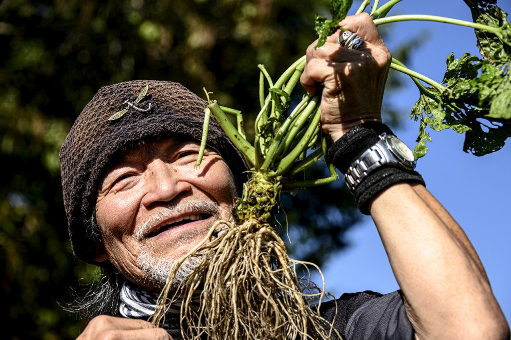 The hero of the Daio Wasabi Farm in Matsumoto showing a freshly harvested wasabi root